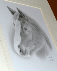 Horse Sparky graphite portrait mounted